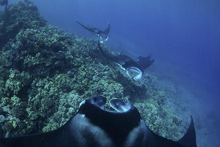 Coastal Marine Life and Snorkeling - Wild Hawaii Ocean